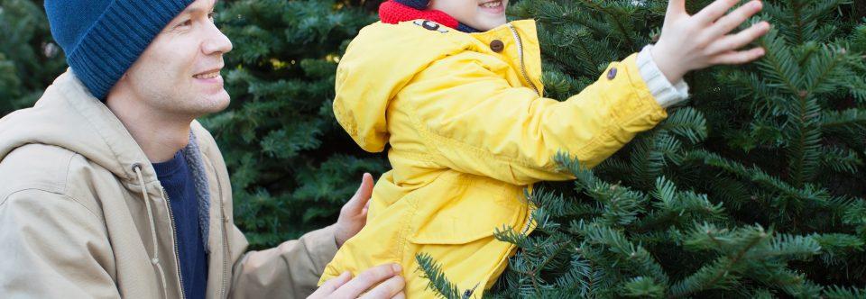 Støt de lokale spejdere – køb et juletræ